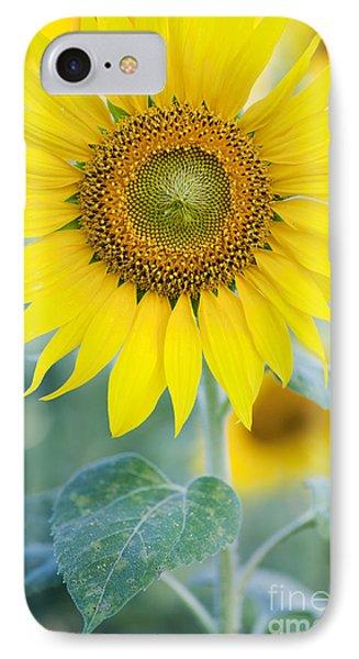 Sunflower iPhone 8 Case - Golden Sunflower by Tim Gainey