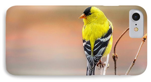 Goldfinch At Sunrise IPhone Case