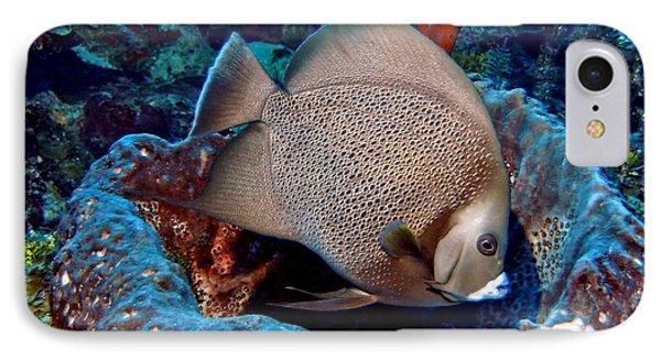 Gray Angel Fish And Sponge IPhone Case