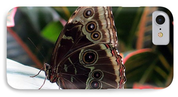Gray Cracker Butterfly IPhone Case