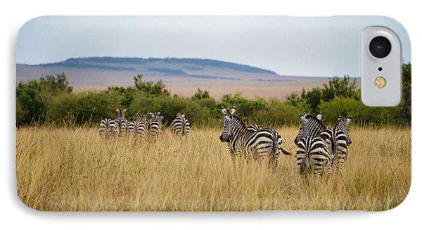Grazing Zebras IPhone Case