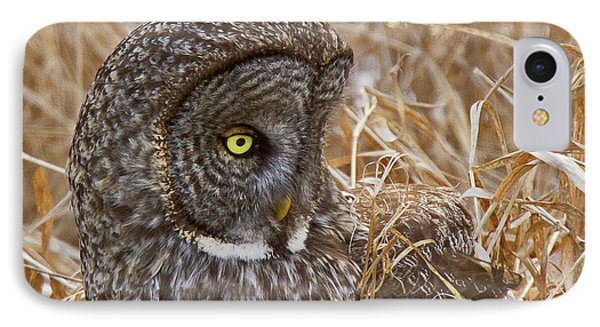 Great Gray On The Hunt I IPhone Case