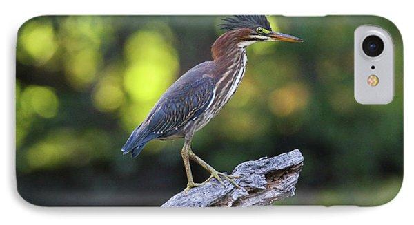 Green Heron Stump IPhone Case