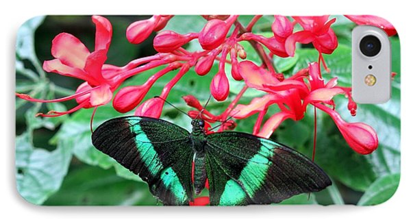 Green Moss Peacock Butterfly IPhone Case