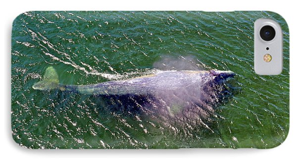 Grey Whale IPhone Case