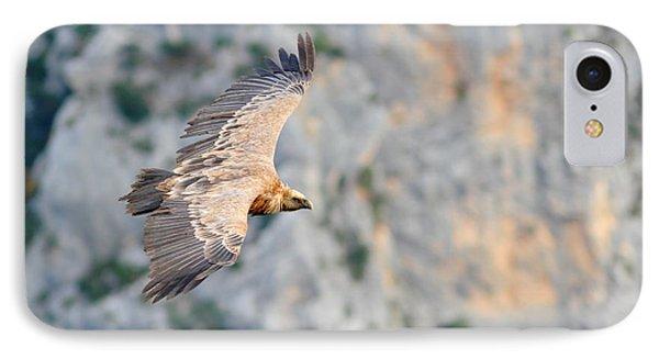 Griffon Vulture IPhone Case