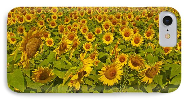 Harvest Gold IPhone Case