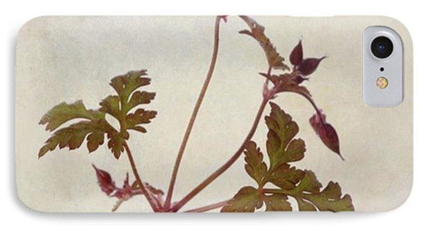 Herb Robert - Wild Geranium  #flower IPhone Case
