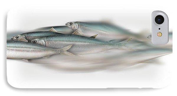 Herring School Of Fish - Clupea - Nautical Art - Seafood Art - Marine Art - Game Fish IPhone Case