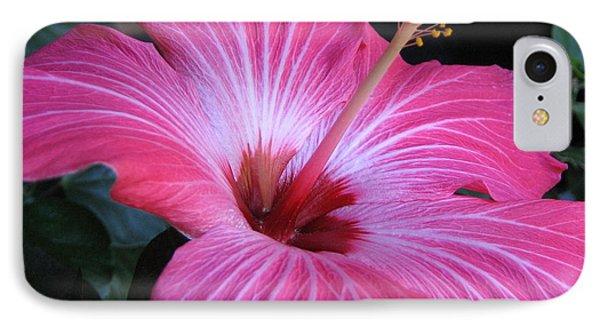 Hibiscus Photograph IPhone Case