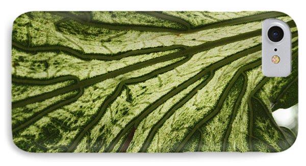 Hibiscus Tiliaceus Variegata 3 IPhone Case