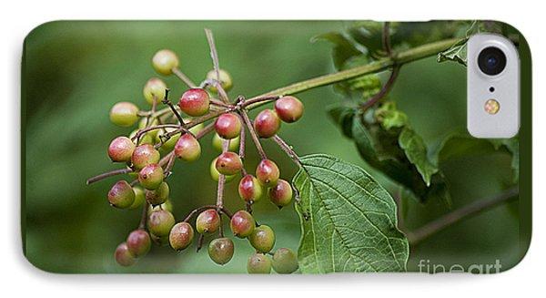 High Bush Cranberry 20120703_106a IPhone Case