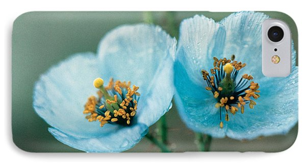 Himalayan Blue Poppy IPhone Case