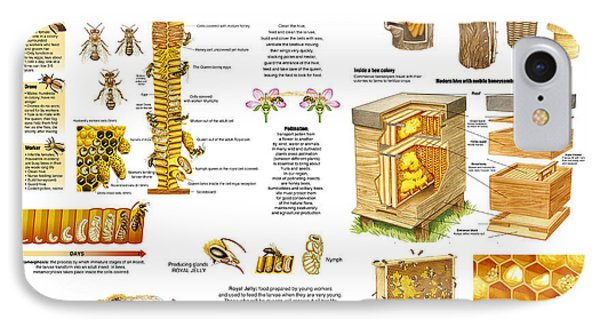 Honey Bees Infographic IPhone Case