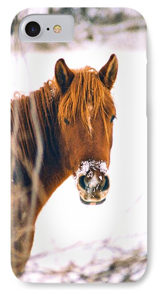 Horse In Winter IPhone Case
