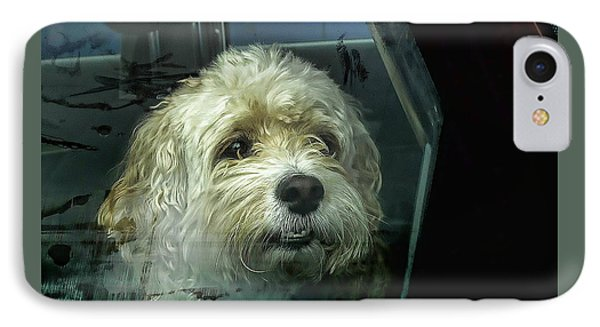 How Much Is That Doggie In The Window IPhone Case
