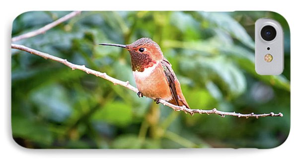 Humming Bird On Stick IPhone Case