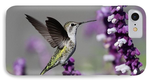 Hummingbird And Purple Flowers IPhone Case