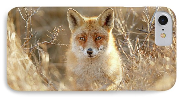 Hungry Eyes - Red Fox In The Bushes IPhone Case