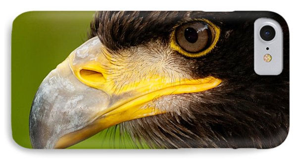 Intense Gaze Of A Golden Eagle IPhone Case