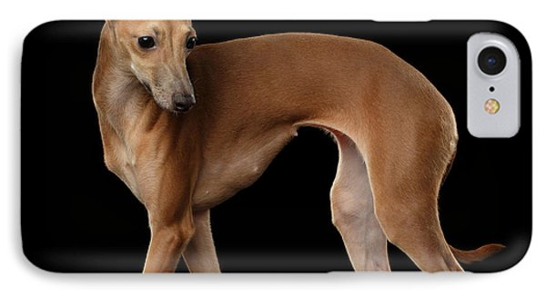 Dog iPhone 8 Case - Italian Greyhound Dog Standing  Isolated by Sergey Taran