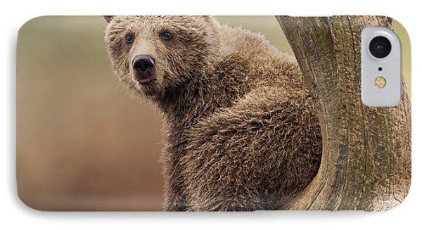 Juvenile Brown Bear - 365-5 IPhone Case