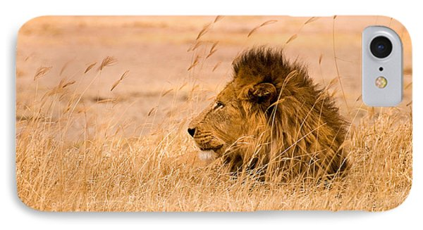 Animals iPhone 8 Case - King Of The Pride by Adam Romanowicz