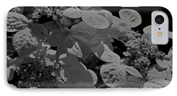 Lace Cap Hydrangea In Black And White IPhone Case