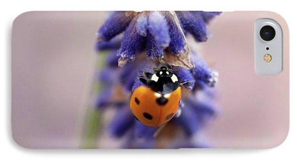 Ladybird On Norfolk Lavender  #norfolk IPhone Case