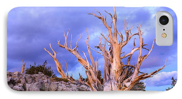 Last Light On The Bristlecones IPhone Case