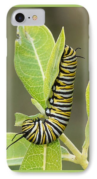 Late Season Monarch IPhone Case