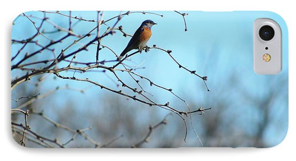 Lazuli Bunting Looks Out IPhone Case