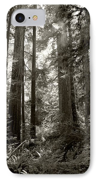 Light Through Redwoods IPhone Case