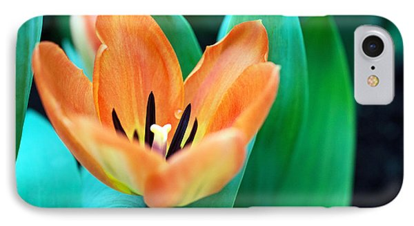 Lily #4 IPhone Case
