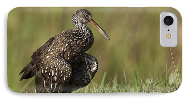 Limpkin Stretching In The Grass IPhone Case