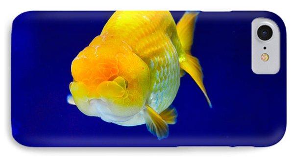 Lion Head Goldfish 5 IPhone Case