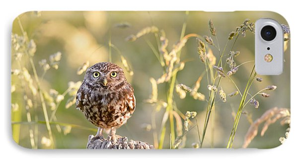 Little Owl Big World IPhone Case