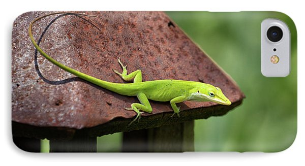 Lizard On Lantern IPhone Case