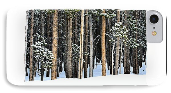 Lodge Pole Pine IPhone Case