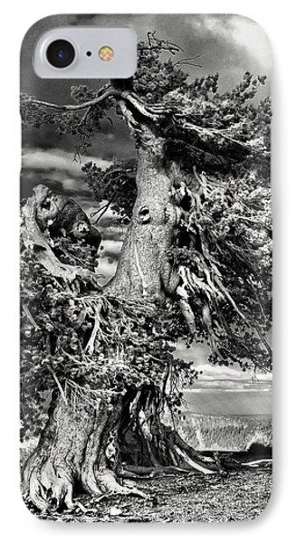 Lone Gnarled Old Bristlecone Pines At Crater Lake - Oregon IPhone Case