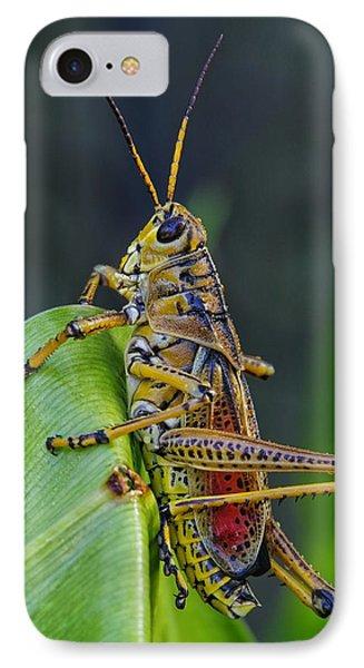 Lubber Grasshopper IPhone Case