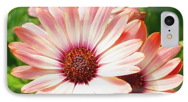 Macro Pink Cinnamon Tradewind Flower In The Garden IPhone Case