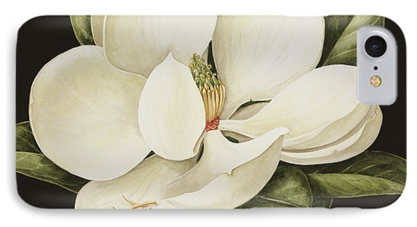Lily iPhone 8 Case - Magnolia Grandiflora by Jenny Barron