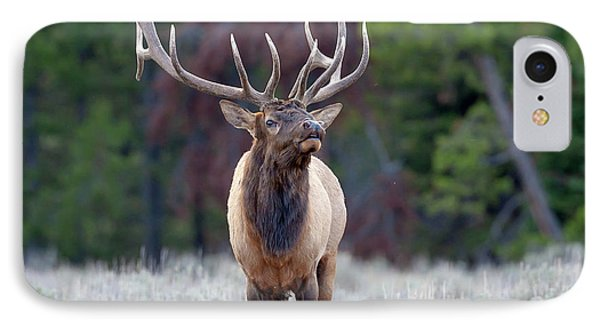 Majestic Bull Elk IPhone Case