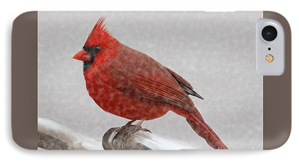 Male Cardinal In Snow IPhone Case