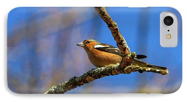 Male Common Chaffinch Bird, Fringilla Coelebs IPhone Case