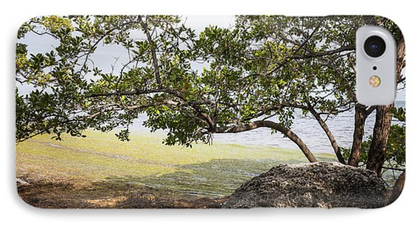 Mangrove Forest IPhone Case