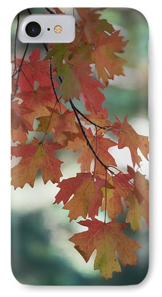 IPhone Case featuring the photograph Maple Leaves Branch  by Saija Lehtonen