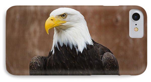 Mature Adult Bald Eagle IPhone Case