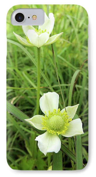 Meadow Anemone IPhone Case
